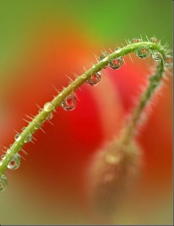 Lindas imagens de flores (14)