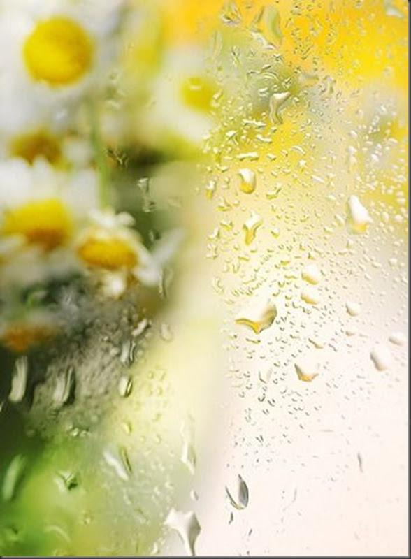 Lindas imagens de flores (11)