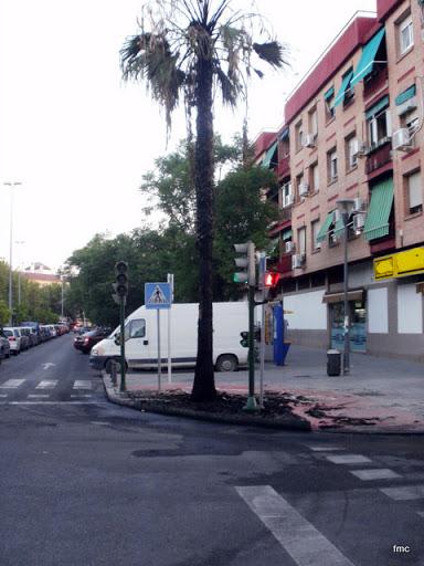Palmera quemada en la esquina de El Cairo.