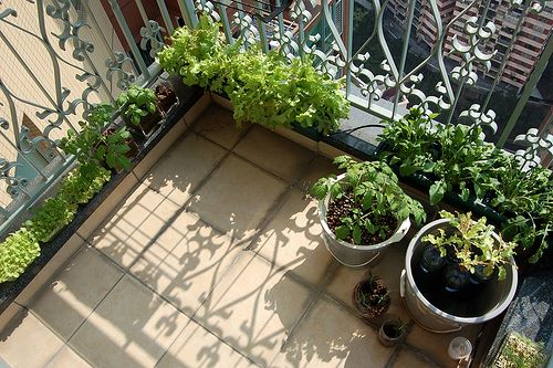 A hydroponic vegetable garden. Must-see, can-do.