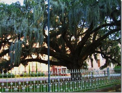 Savannah 087