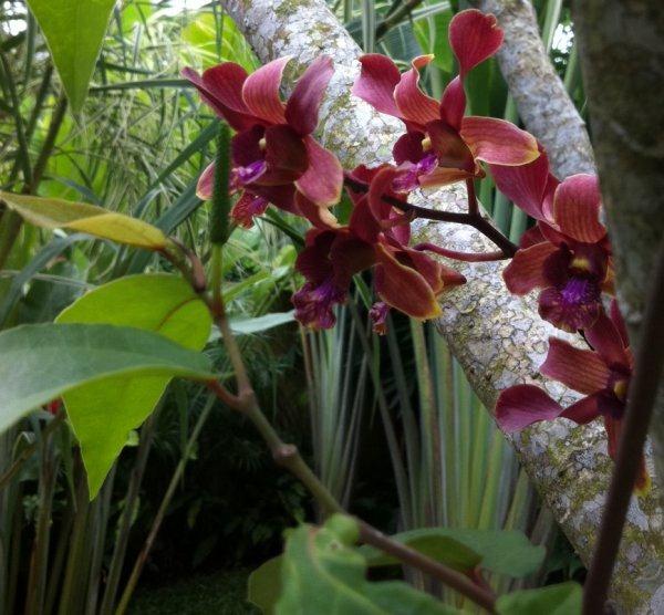 hortusbotanicus