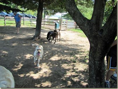 AlumCreekdoggiepark07-23-10c