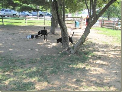 AlumCreekdoggiepark07-23-10e