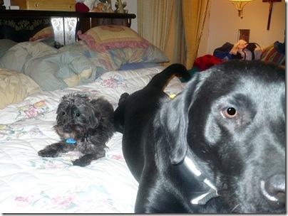 Rigg's&Sadie01-14-11