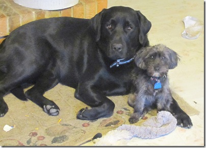 Rigg's&Sadie02-24-11b