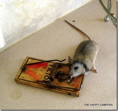 mice 004