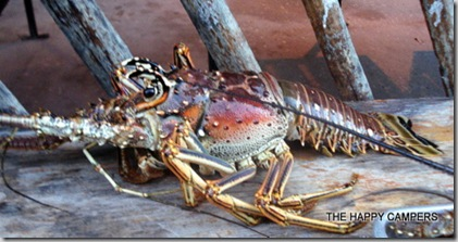lobster 010