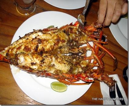 lobster 024