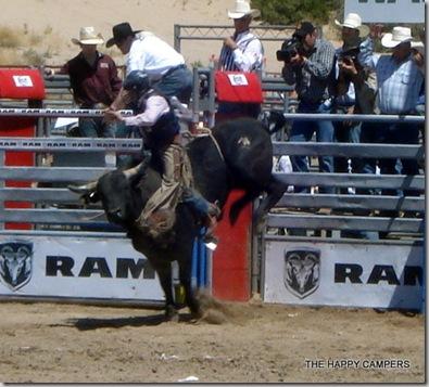 bulls 012