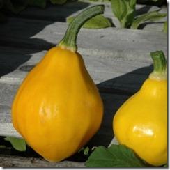 squash papaya pear