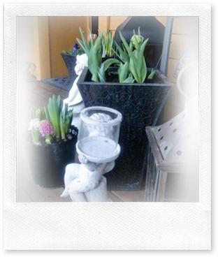tulipan krukke
