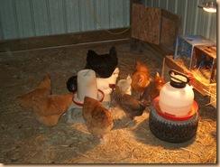 chicken coop (1)