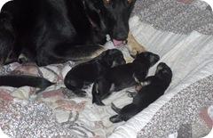 New Puppys 2010-09-25 008