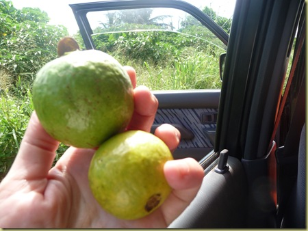 Yum!  Guava fruit