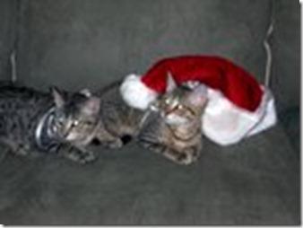 santa cats1
