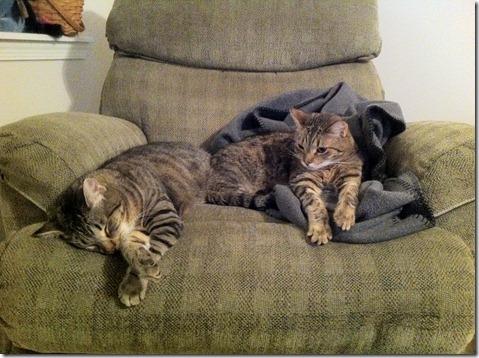 snuggle buddies 3