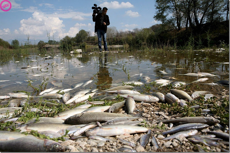 GREECE POLLUTION DEAD FISH