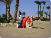 Egypten 2009 025