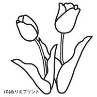 flores_75