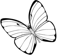 jyc mariposas (6)