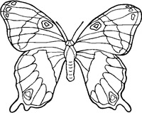 jyc mariposas (23)