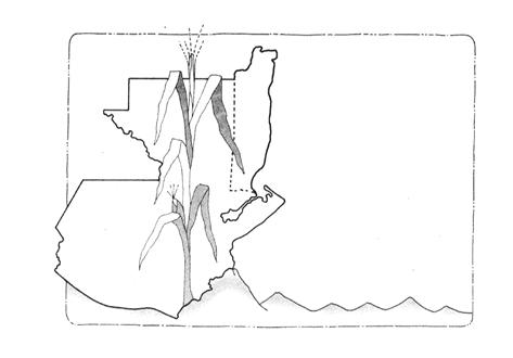 colorear  mapa guatemala