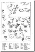 colorear dia de canarias - -020