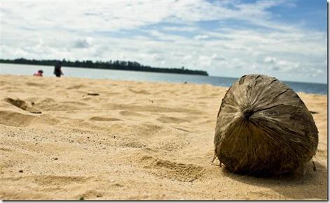 kelapaer