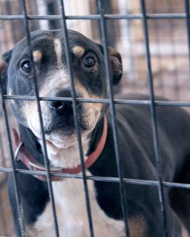Dog-Baxter-IMG_7120-Done Reduced