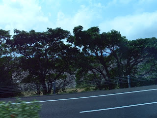 沖縄自動車道より下流側堤体を望む(その2)