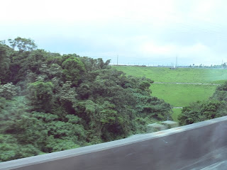 沖縄自動車道から堤体下流側を望む(その1)