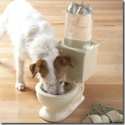 dog-toilet-bowl_preview