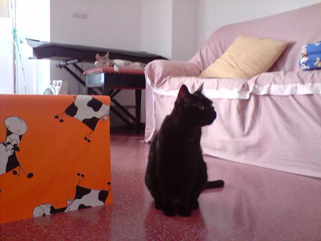 ¡¡¡Pepita ya está en casaaaaaaaaaaaaa!!!! :D - Página 5 P070710_17.27
