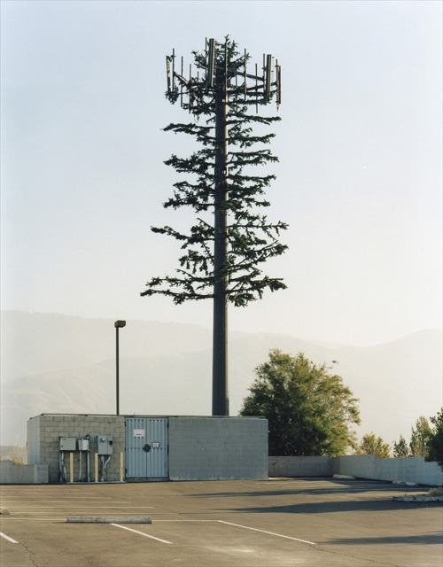 cell-phone-trees (18)