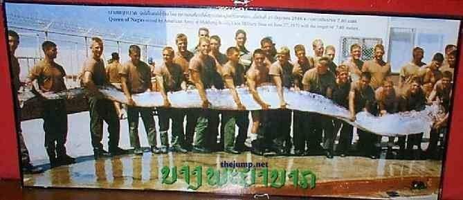 oarfish (3)