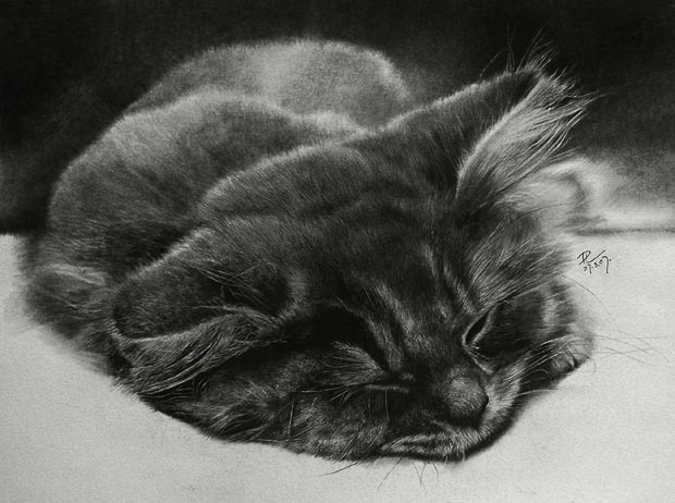 Sleepy-cat_1472703i