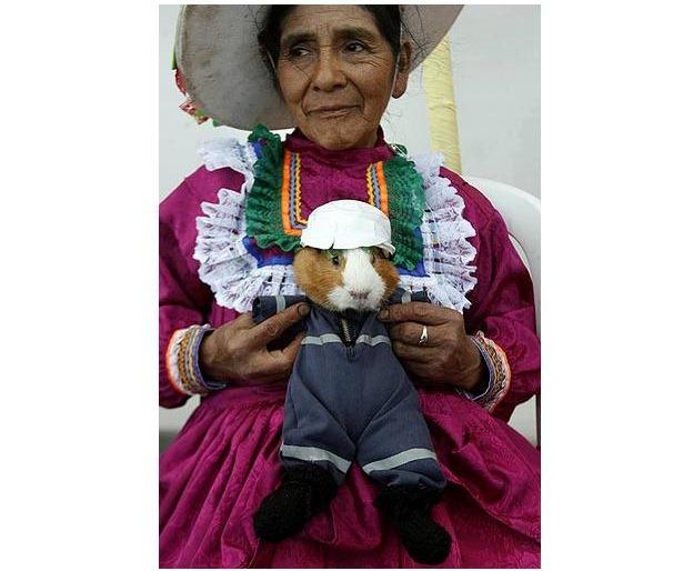 guinea-pig-festival (7)