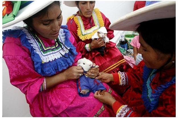 guinea-pig-festival (1)