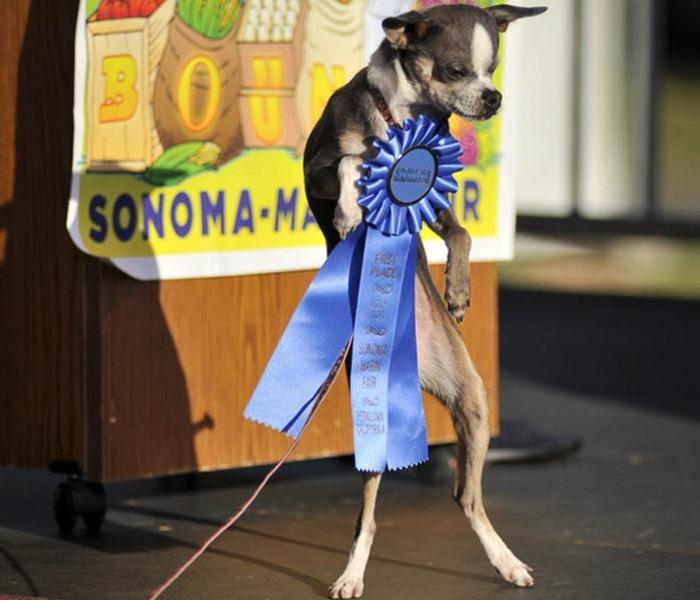 ugliest-dog (1)