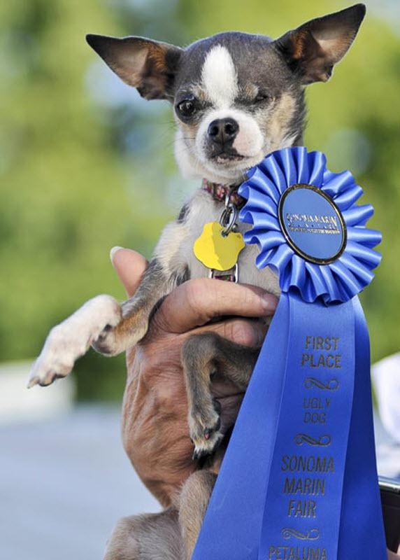ugliest-dog (2)