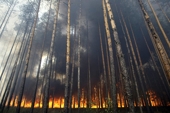 russia-forest-fire (52)
