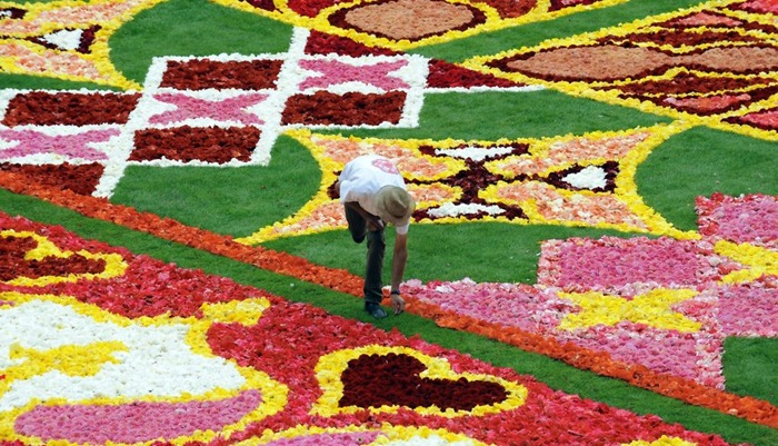 brussels-flower-carpet (1)