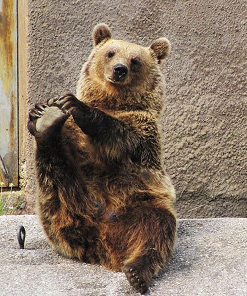 bear-yoga (6)