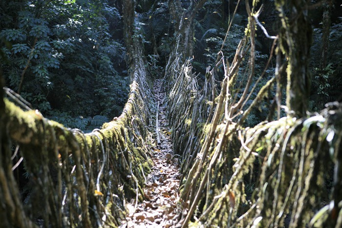 root-bridges (3)