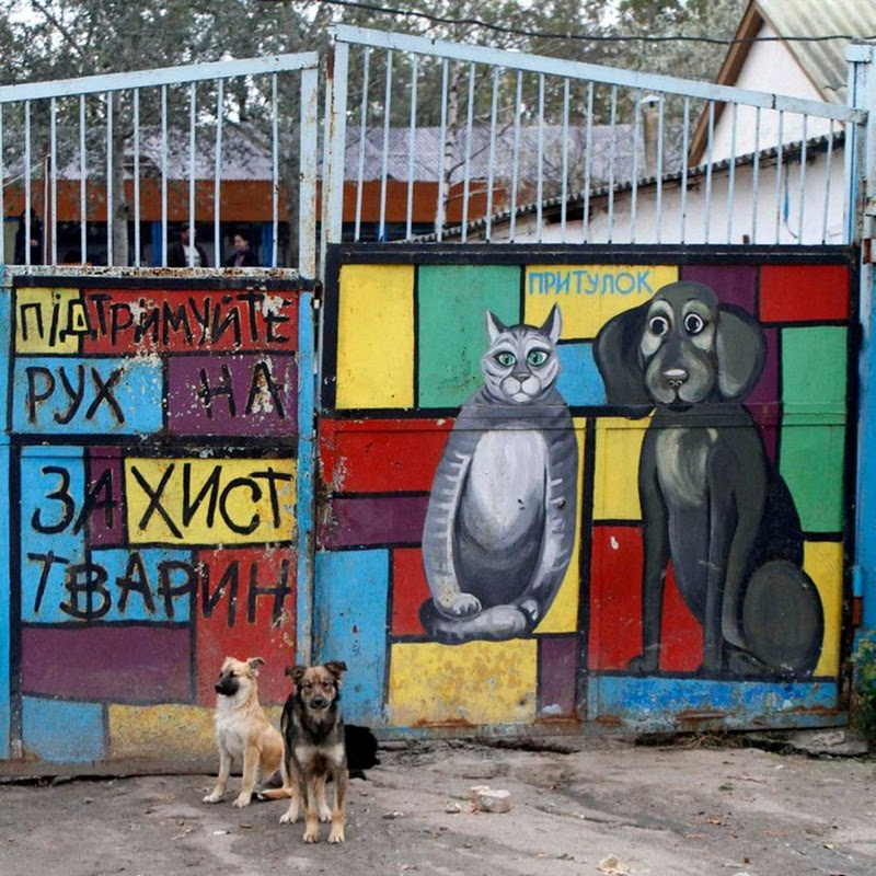 Shelter for Homeless Animals in Pirogovo, Ukraine
