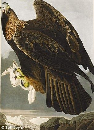 birds-of-america (8)