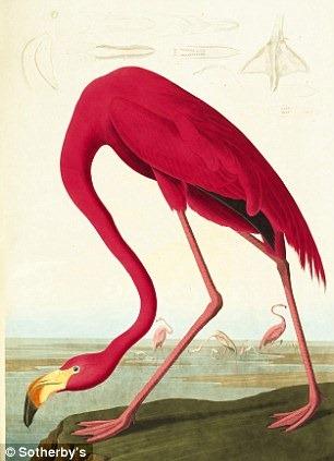 birds-of-america (9)