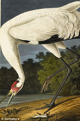 birds-of-america (7)