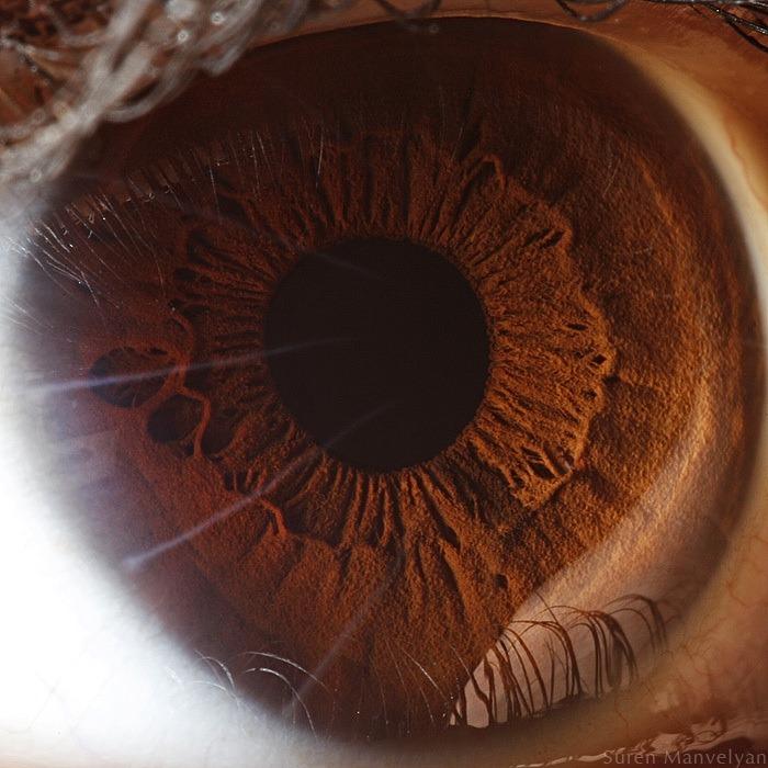 macro-eyes (1)